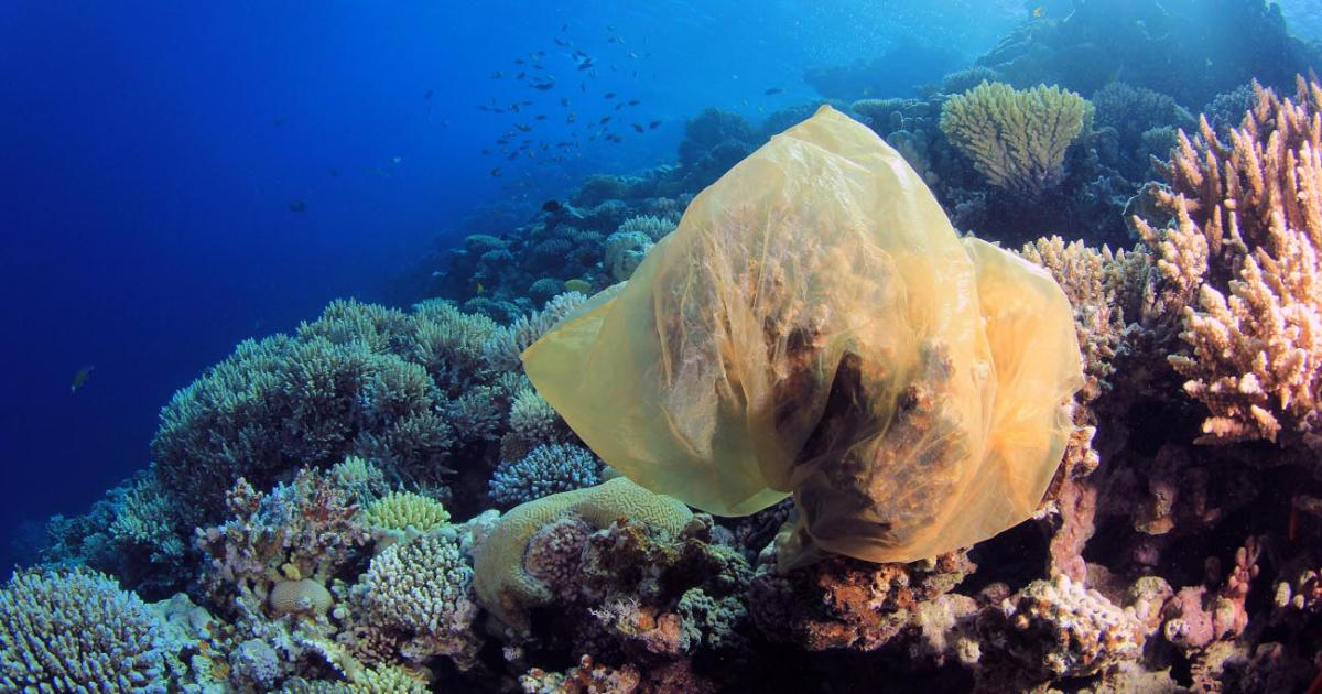 Plastic trash is killing coral reefs. Here's how we can still save our oceans.