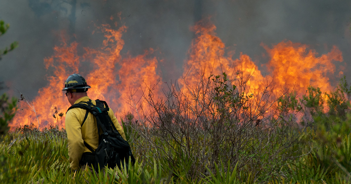 4 ways the right policies can help us confront wildfires